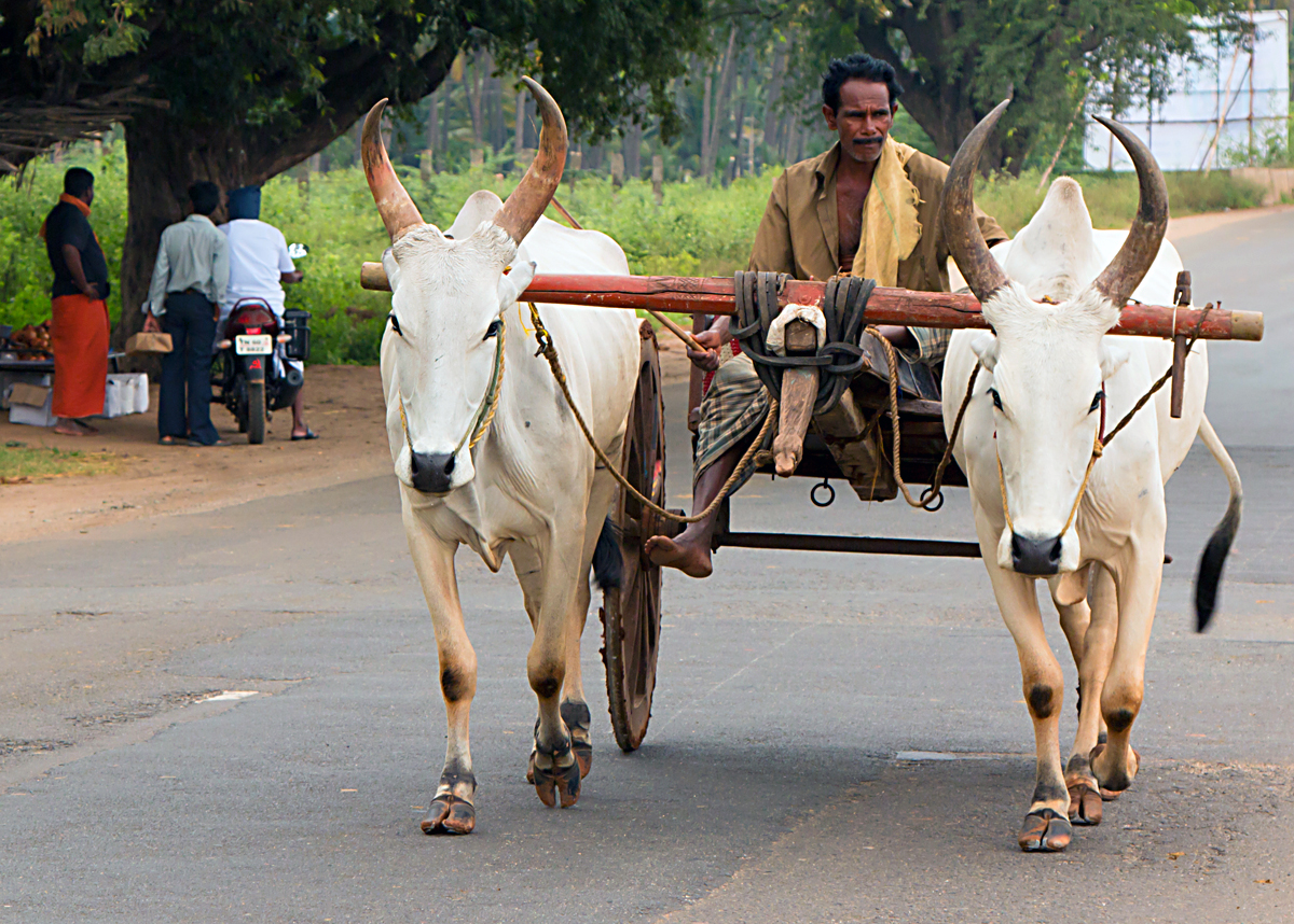 INDIEN Kumily Thekkady Kumarakom Kerala Menschen Tempel FINEST-onTour 7960.jpg