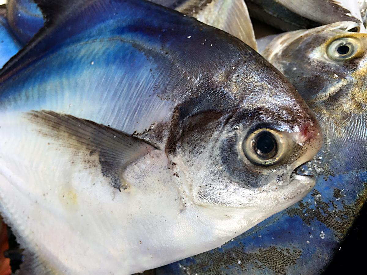 INDIEN Cochin Kerala Menschen Fischmarkt FINEST-onTour 2341.jpg