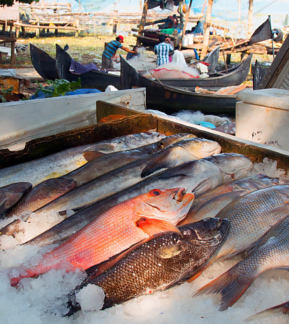 INDIEN Cochin Kerala Menschen Fischmarkt FINEST-onTour 2334.jpg