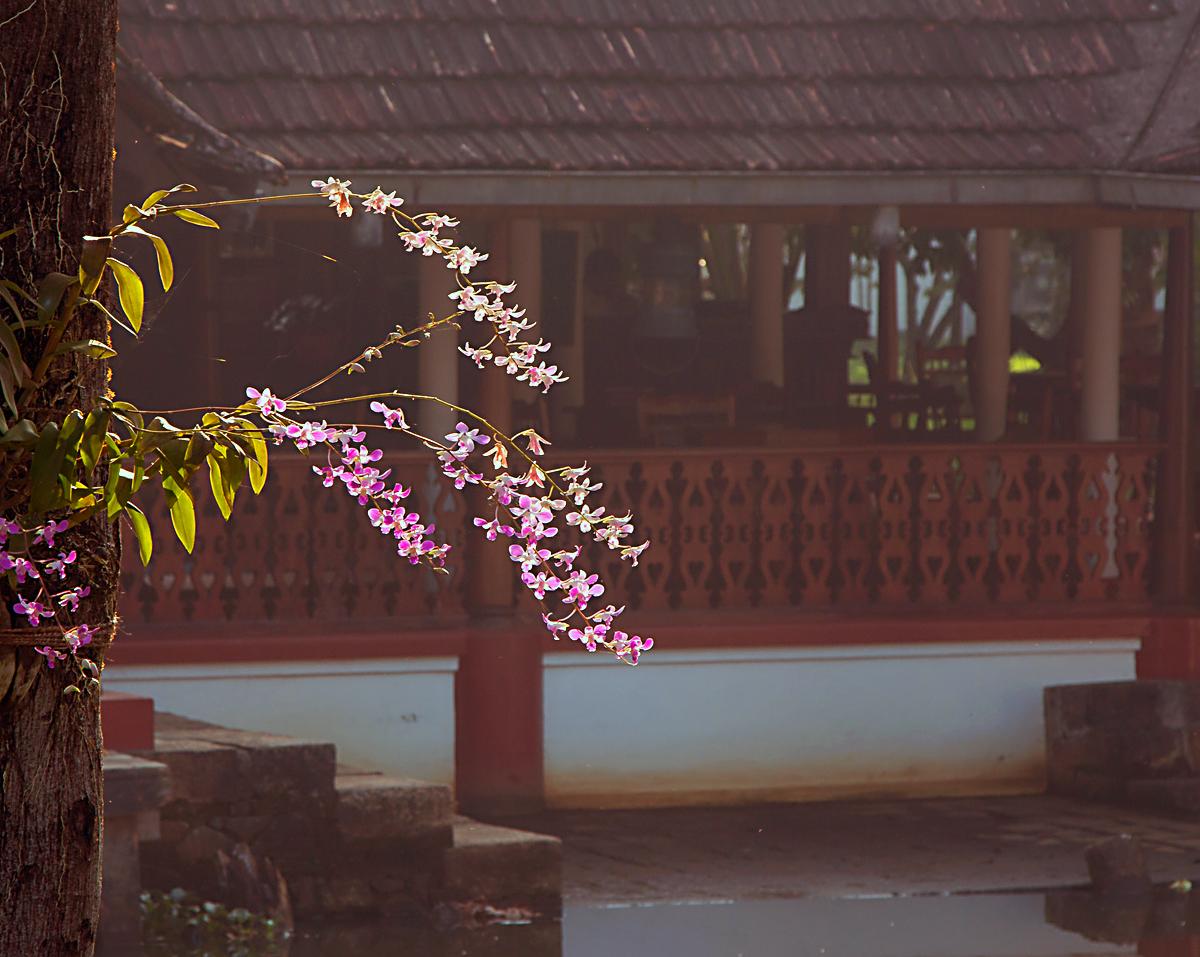 INDIEN Hotel  Kumarakom Lake Resort FINEST-onTour 8316.jpg