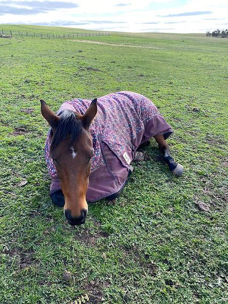 retired Horse
