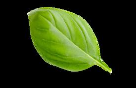 hoja-verde-de-la-albahaca-56745493.png