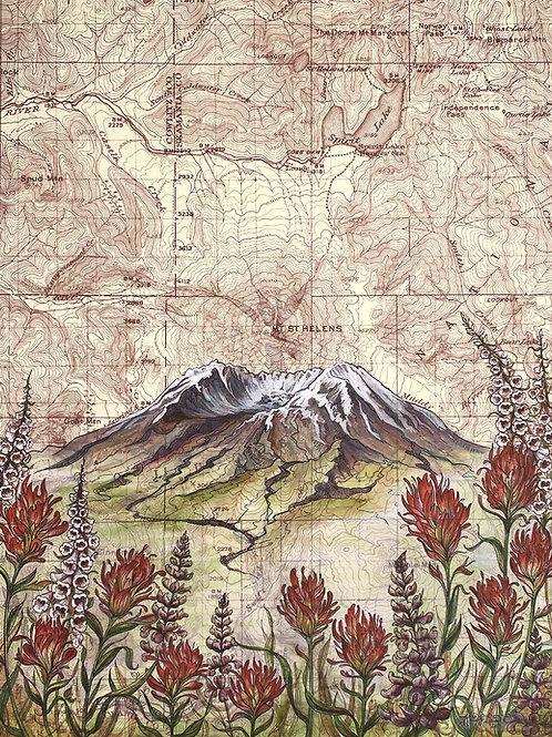 Mt St Helens Wildflowers Print