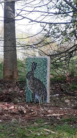 Hare in situ 2