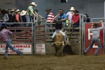 Bull Riding 1