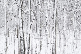 Winter-08.jpg
