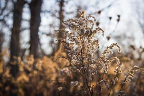 Weeds-02.jpg