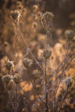 Weeds-07.jpg