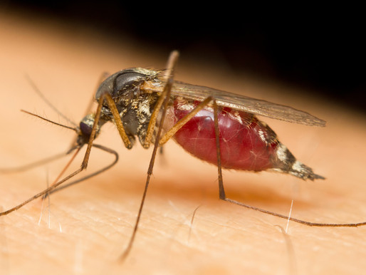 Fight the Bite: Protect Yourself Against Mosquitoes This Summer