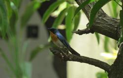 gir birding 16