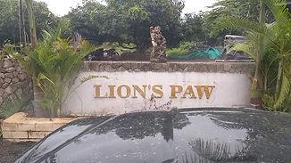 lions paw.jpg