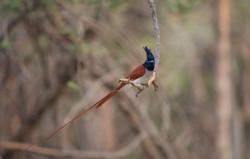 gir birding 18