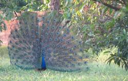 gir birding 17