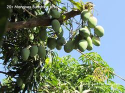 Home of World famous Kesar Mango