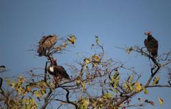 gir birding 20