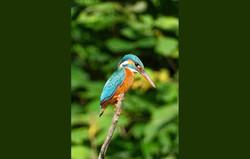 gir birding 14