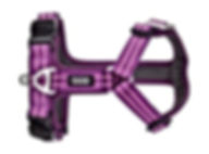 comfort-walk-harness-air~3.jpg