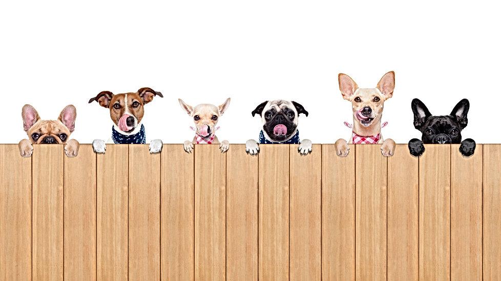 6 Hunde am Zaun.jpg
