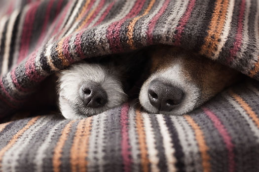 zwei Hundeschnauzen.jpg