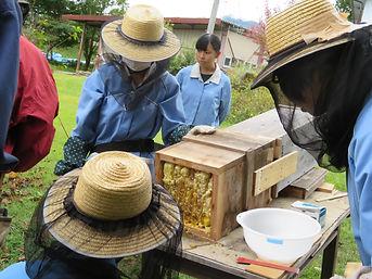 ⑦養蜂.jpg