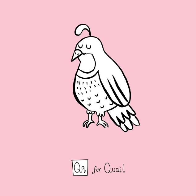 Qq - Quail