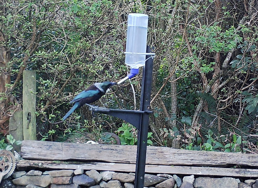 Peka peka bird feeders are a great way to set up a sugar water feeder in your backyard.