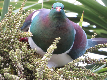 Beholding Backyard Birds
