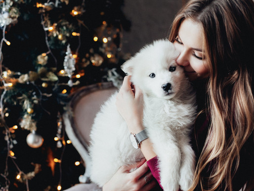 Tips for Enjoying a Great Christmas with your Dog