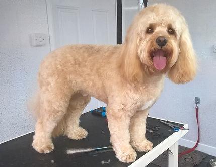 Fantastic dog groom