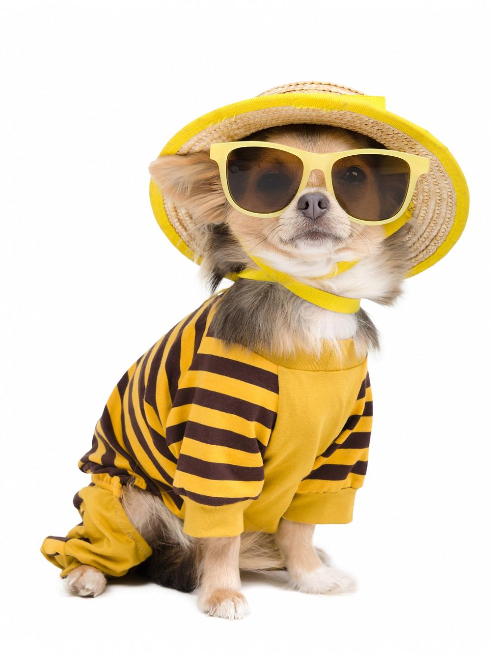 heatwave dog