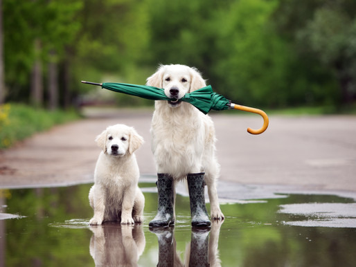 Five Great Tips for Walking your Dog in the Rain