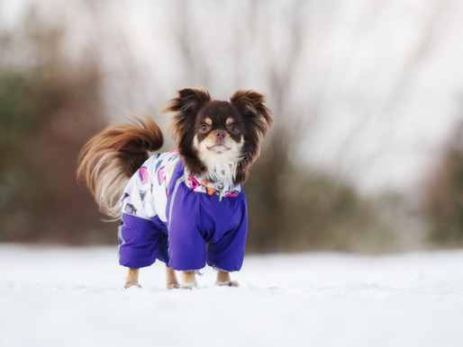 Tips for Safe and Happy Winter Dog Walking