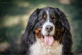 Dog-13.jpg