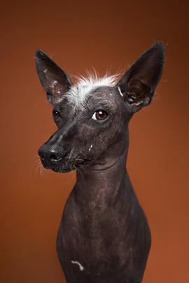 Dog-5.jpg