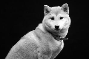 Dog-8.jpg