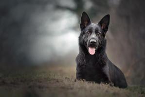 Dog-14.jpg