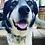 Thumbnail: Happy Birthday, Hand Drawn Pet Greeting, Blank Card, A6