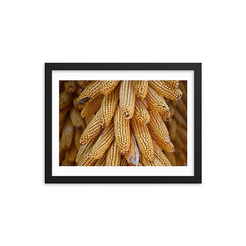 Corn Color Framed photo paper