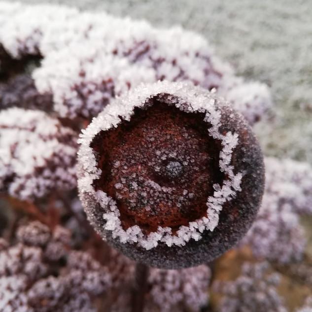 Beetstecker Mohnkapsel im Winter