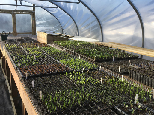 Essential tools and equipment for the market gardener