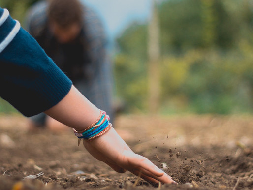 Market gardeners to inspire a thriving and sustainable growing practice
