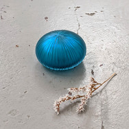 Teal Mitre Peridiole