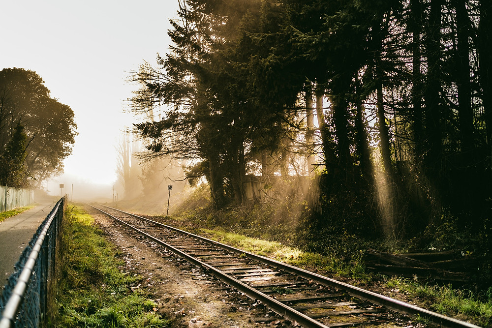 Train tracks at dusk, surrounded by trees. Depiction of 'the wrong side of the tracks'.