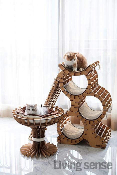 다리가 짧은 먼치킨 종의 반려묘 설과 봄. 스크래처 기능이 있는 카펫 매트가 부착된 캣타워와 타워형 베드는 모두 네꼬모리(www.nekkomori.com)에서 구매.