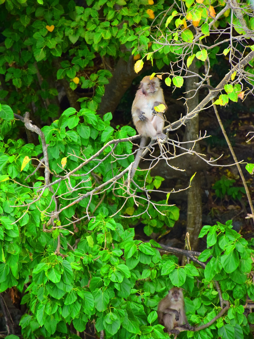 Monkey, Monkey Beach