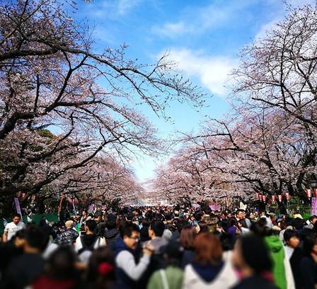 The Spring Festival in #uenopark 🌸🌸🌸😍😍😍