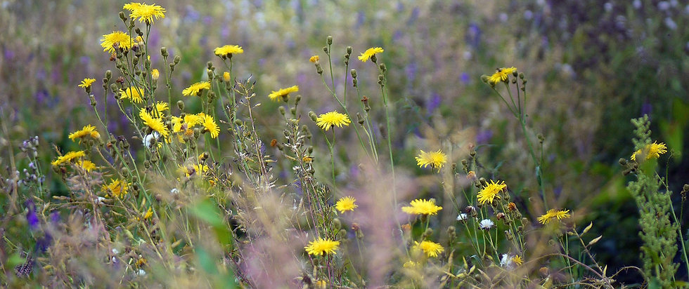 wild-herbs-1534531_1920_edited.jpg