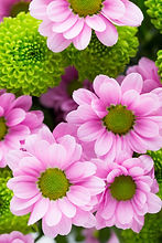 easter-spring-flowers-background-more-fl