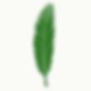 green eagle feather 1 .png