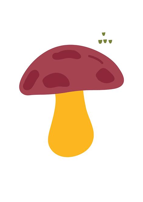 Cogumelo Bosque - P19070